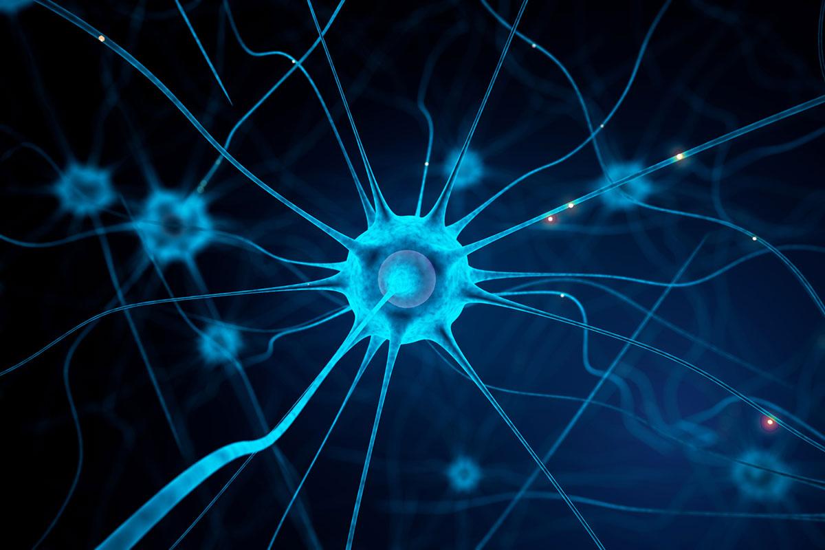 AVC : prévenir les séquelles en agissant sur l'environnement des neurones ?